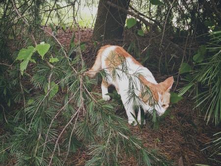 萌『虎』下山